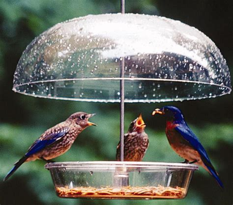wild birds unlimited tips to keep your mealworms alive
