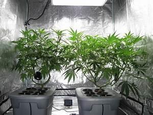 Indoor Grow Anleitung : cannabis indoor anbau systeme einsteiger anleitung irierebel ~ Eleganceandgraceweddings.com Haus und Dekorationen