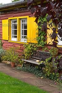 Haus Mit Fensterläden : bild gartenbank vor einem haus mit gelben fensterl den 536212 bilder und videos von pflanzen ~ Eleganceandgraceweddings.com Haus und Dekorationen