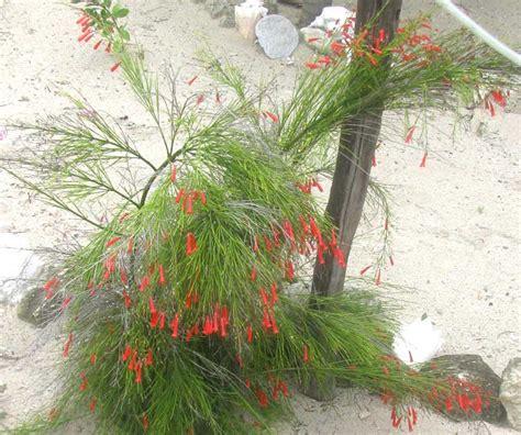 maret tukang taman minimalis murah jual tanaman