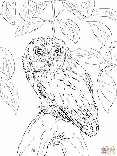 Owl Coloring Screech Short Eared Eastern Sheets