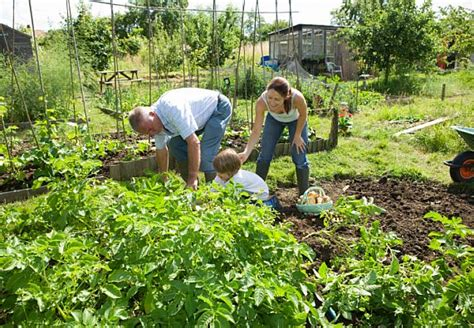 Mischkultur Mit Obst Und Gemüse  Obi Ratgeber