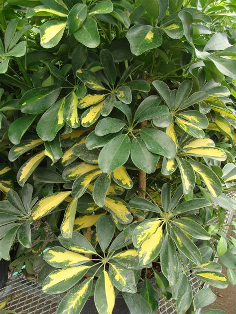 Tropical Potted Plants Helenasourcenet