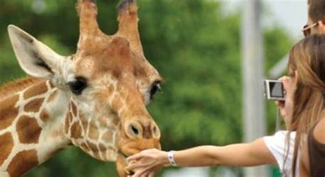 knowsley safari park local attractions leisure breaks