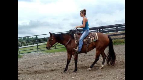 quarter tall horse bay