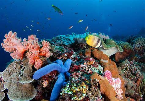 wall point nusa penida keindahan bawah laut tiada tara
