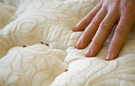 attention aux punaises de lit dossier estrie pluscom
