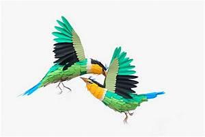 New paper birds and wildlife by diana beltran herrera for New paper birds and wildlife by diana beltran herrera