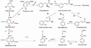 Biosynthesis Of Salicylic Acid In Arabidopsis Thaliana