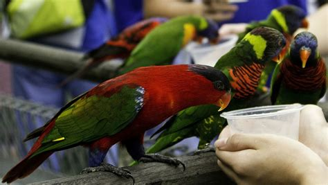 How To Properly Care For Your Pet Birds Petbirds