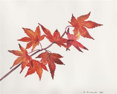 maple leaves japan japanese maple leaves