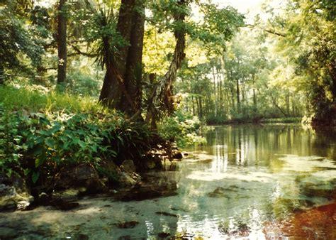 Silver Springs In Florida  Beautiful Attractions Tarzan