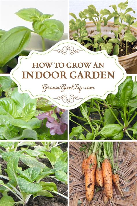 Herbs That Can Grow Inside by How To Grow An Indoor Garden Garden Time Growing