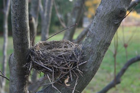 birds nest pics delco daily top ten top 10 the bird nest
