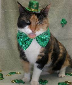 Happy St. Patrick's Day Cats & Dogs | Pet Pure™