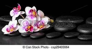 Orchidee Klebrige Tropfen : sch ne steine lila panorama zen phalaenopsis ~ Lizthompson.info Haus und Dekorationen