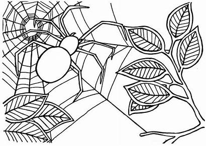 Spider Coloring Pages Web Drawing Iron Halloween