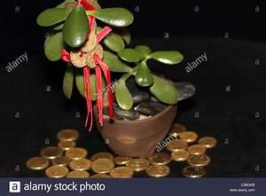 Geldbaum Feng Shui : feng shui m nzen auf geldbaum mit goldm nzen symbolisiert erfolg und reichtum stockfoto bild ~ Bigdaddyawards.com Haus und Dekorationen