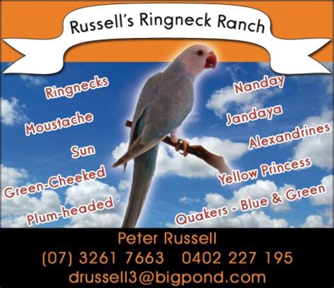 russells ringneck ranch indian ringneck psittacula