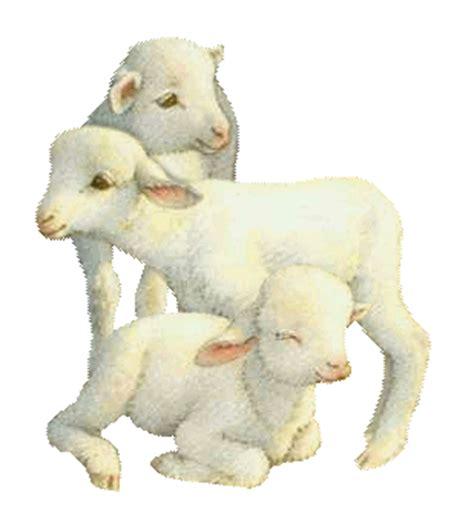 Résultat d'images pour gif mouton