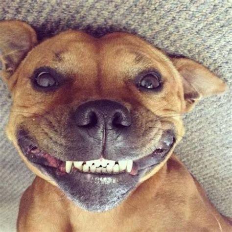 Smiling Meme Smiling Meme Related Keywords Smiling Meme