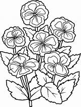 Coloring Flower Flowers Pages sketch template