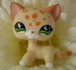 lps shorthair cat i this lps lps shorthair cats
