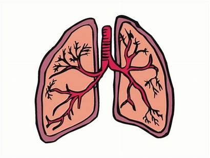 Lungs Cartoon Respiratory System Prints Funny Transparent