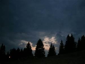 Dark Pine Forest by ttz on DeviantArt
