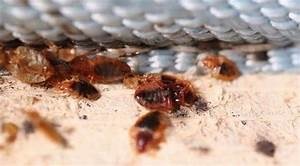 bed bug infestations on the rise in toronto study With bed bugs montreal