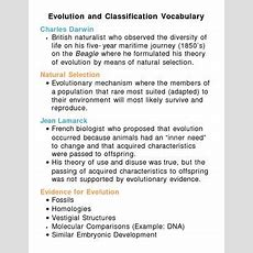 Evolution And Classification Unit Vocabulary Lesson Plan By Lisa Michalek