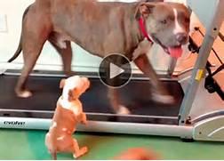 Funny Dog Videos   Cat...
