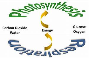 4-photosynthesis And Cellular Respiration