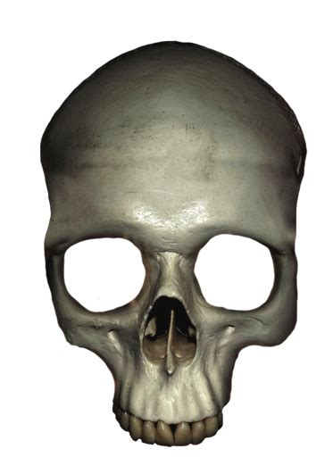 Skull Clipart Cliparts