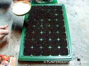 Planter Des Graines De Tomates : comment semer les tomates youtube ~ Dailycaller-alerts.com Idées de Décoration