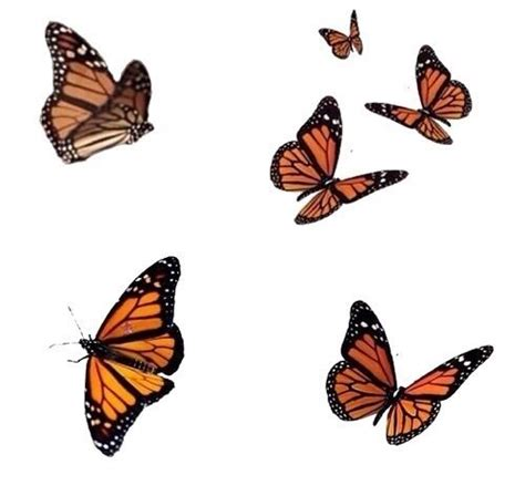aesthetic butterfly png