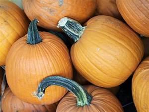 How to Grow Large Pumpkins HGTV