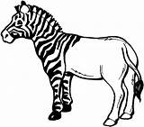 Zebra Drawing Clipart Clip Coloring Stripes Line Without Animals Half Striped Wikiclipart Smiling Horse Resource Still Wildlife Cliparts Would sketch template