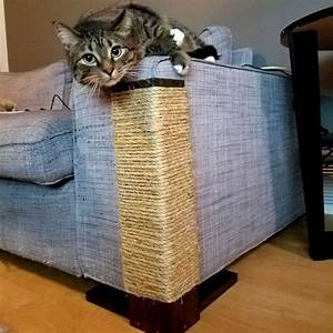 cat scratch sofa has your cat focused her scratching With furniture protector from cats