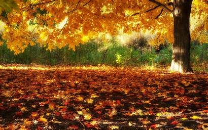 Fall Wallpapers Autumn Scenery