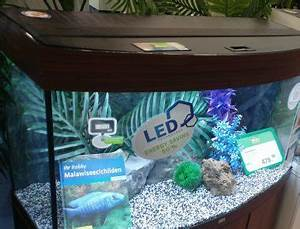 Aquarium Led Beleuchtung : beste led aquarium beleuchtung test vergleich wichtige infos ~ Frokenaadalensverden.com Haus und Dekorationen