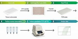 Rodent Chart Cell Lysis Rt Qpcr Kits Life Science Research Bio Rad