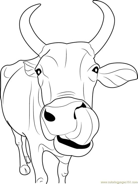 Cow Face Coloring Page Az Pages Head