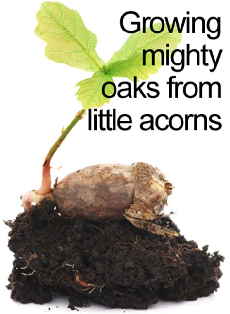 mighty oaks from acorns grow display banner growing mighty oaks from acorns discipleblog