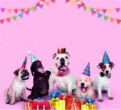 Birthday Funny Dog Wish Happy Fun 123greetings
