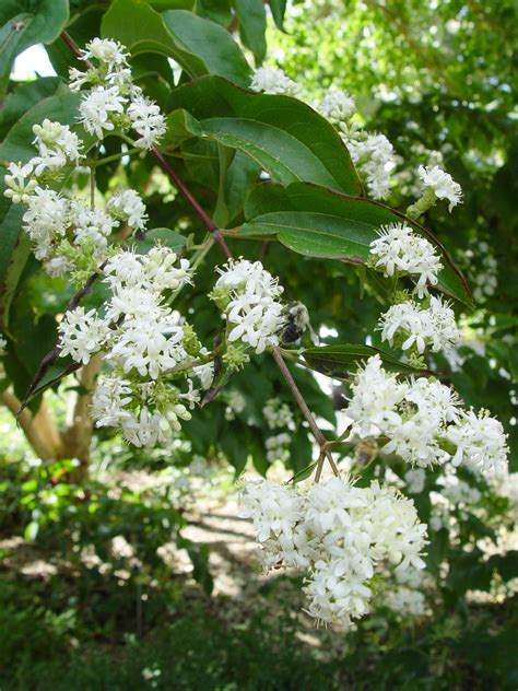 flowers that bloom at what blooms when in central pennsylvania garden housecalls