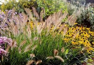 Gräser Winterhart Immergrün : gr ser pflanzen 11 winterharte beflanzungsideen f r den garten ~ Frokenaadalensverden.com Haus und Dekorationen