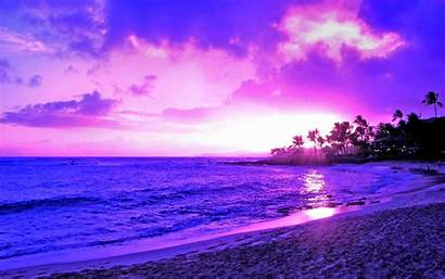 Sunset Purple Backgrounds Tree Scenery Pretty Wallpapers