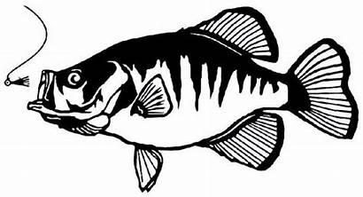 Crappie Fish Fishing Clipart Decal Decals Vinyl