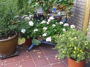 Ameisen Auf Der Terrasse : k belpflanzen auf der terrasse gartenelfe ~ Lizthompson.info Haus und Dekorationen